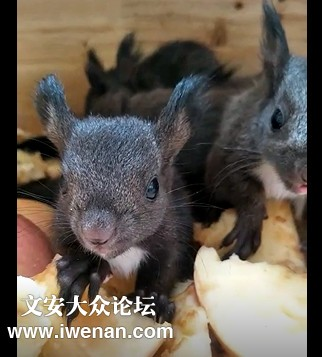 魔王松鼠1.jpg